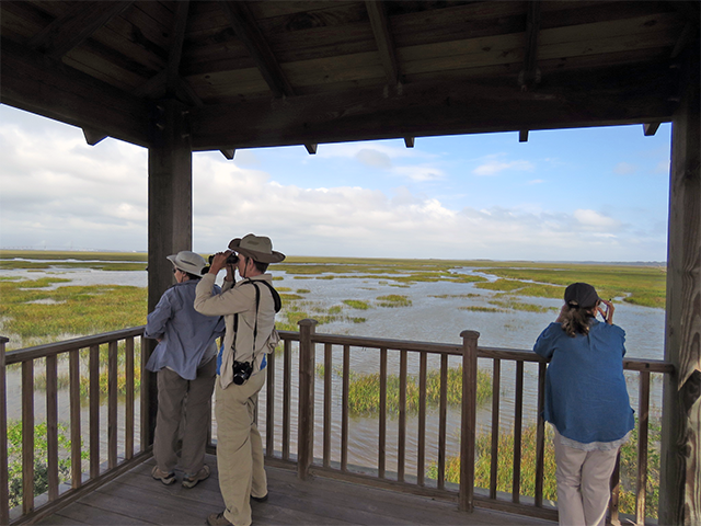 Group on Tower Jekyll Is., GA by Ventures Birding Tours